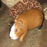 PiggyBedSpreads1