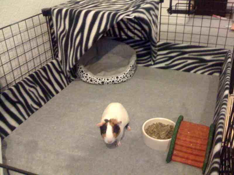Guinea pig gallery fleece cage for Coroplast guinea pig cage for sale