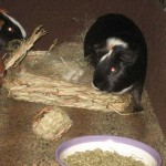PiggyBedSpreads2