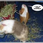 PiggyBedSpreads58