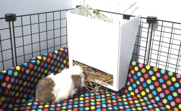Hay Rack Piggybedspreads Com Fleece Cage Bedding
