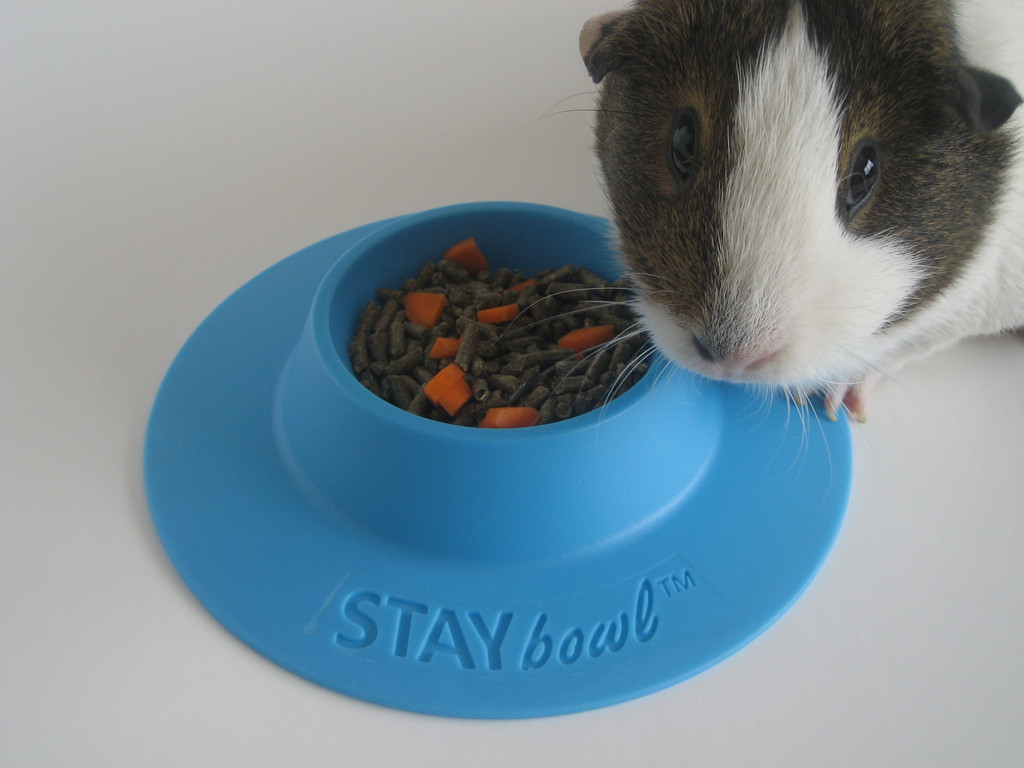 Staybowl fleece cage bedding for Where to get c c cages