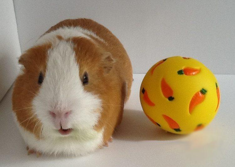 Wheeky Ball